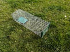 Live trap with a pedal on a cat, marten, mink, fox